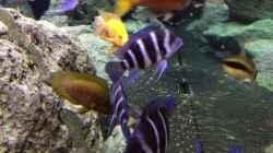 Besatz im Aquarium unsere Küchenrückwand )