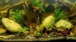 Aquarium Natur of Dreams Ogowe