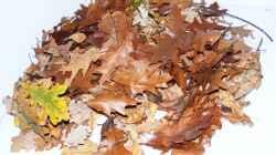 Das Herbstlaub