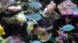 Aquarien-Ausschnitt