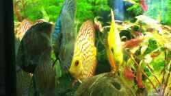 Besatz im Aquarium RIO 300