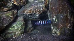 Besatz im Aquarium D-$To®M ( My First ) Nur noch als Beispiel
