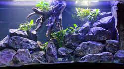 Aquarium D-$To®M ( My First ) Nur noch als Beispiel