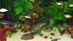 Besatz im Aquarium Becken 18321
