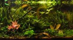 Aquarium Asia 180