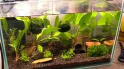 Aquarium kleines Wirbellosenbecken