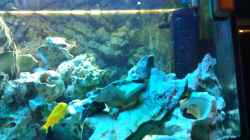 Dekoration im Aquarium Becken 18467
