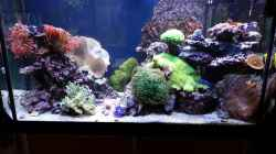 Aquarium No´s Reef