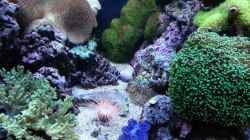Besatz im Aquarium No´s Reef