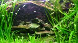 Aquarium Snake skin Endler Aquarium