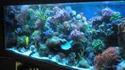 Aquarium Becken 18763