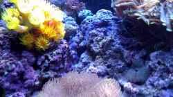 Aquarium Ocean Life