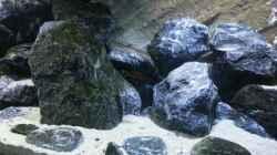 Dekoration im Aquarium Neolamprologus buescheri Artbecken