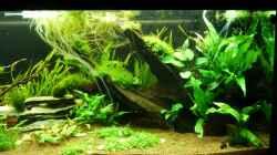 Aquarium Naturaquarium