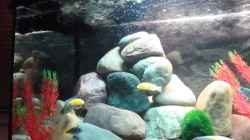 Dekoration im Aquarium Malawi 200 Liter