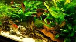 Aquarium Becken 19239