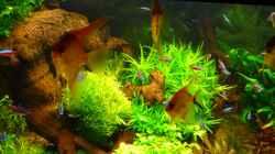Pflanzen im Aquarium Becken 19239