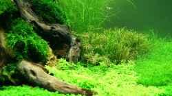 Pflanzen im Aquarium Becken 19330
