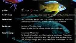 Besatz im Aquarium Malawi Homezone / aufgelöst