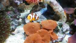 Aquarium meine neuste Sucht!