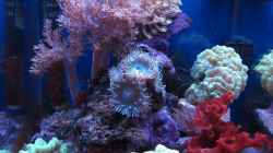 Aquarium deep blue reef