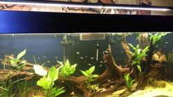 Aquarium Südamerkabiotop Ausschnitt