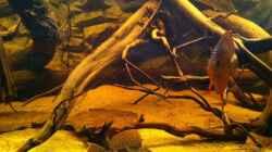Rot Türkis Weibchen und L165