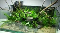 frisch bepflanzt