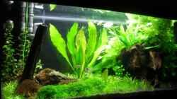 Aquarium 112Ltr. Tropenbecken -nur noch als Beispiel-