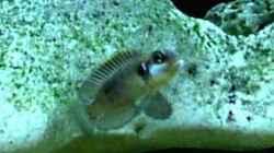 Besatz im Aquarium Becken 198