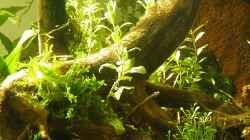 Symbiose zwischen Wurzeln und Pflanzen - 06.05.2011