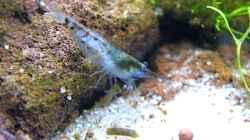 Blue Pearl auf Entdeckungstour - 23.05.2011