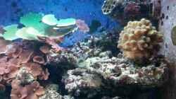 Neue Korallen haben auch Einzug genommen