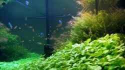 Aquarium Saphir