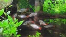 Besatz im Aquarium Rainbowland (aufgelöst)