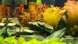 Dekoration im Aquarium Meine Ruhezone