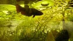 Besatz im Aquarium KaFi