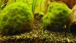 Pflanzen im Aquarium KaFi