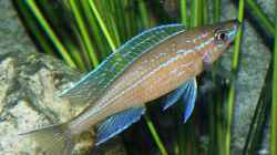 Besatz im Aquarium Becken 2