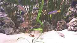 Dieses Bild entstand mit der Webcam