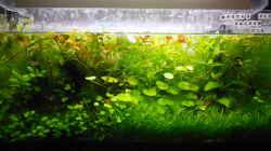 Aquarium Mikrokosmos 2.0