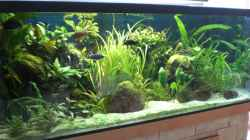 Aquarium Ostafrikanisches Becken