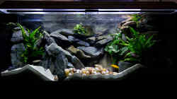 Aquarium Fertighaussiedlung