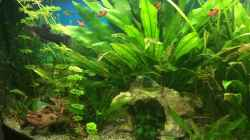 Aquarium fluval vicenza 260