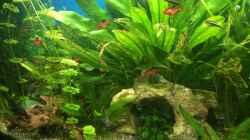 Pflanzen im Aquarium fluval vicenza 260