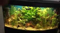 Besatz im Aquarium fluval vicenza 260