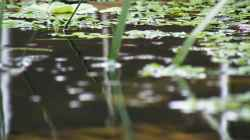 Blick über das Wasser - 02.07.2011