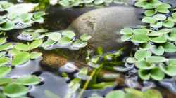 An der Wasseroberfläche - 02.07.2011