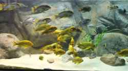 Besatz im Aquarium Becken 20323