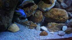 Dekoration im Aquarium Malawi (nur noch Beispiel)